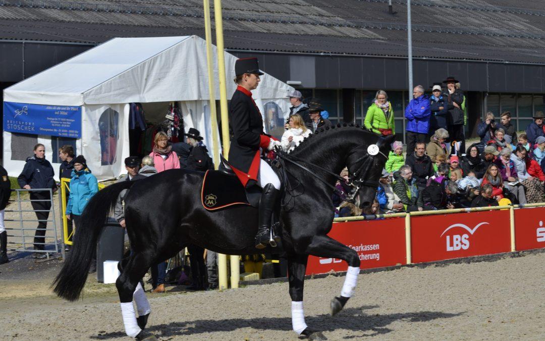 Eladó lovak – amire vevőnek és eladónak is figyelnie kell